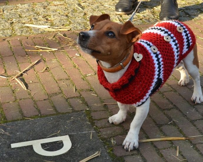 Small Dog Sweater Review - Post Thumbnail